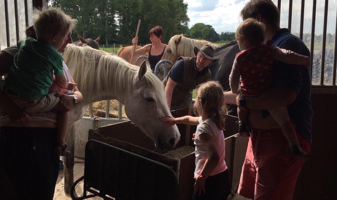 Paardenkamp: 2-daagse voor gezinnen