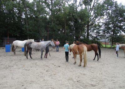 Gezinsweekend. Grondwerk natuurlijk paardrijden.