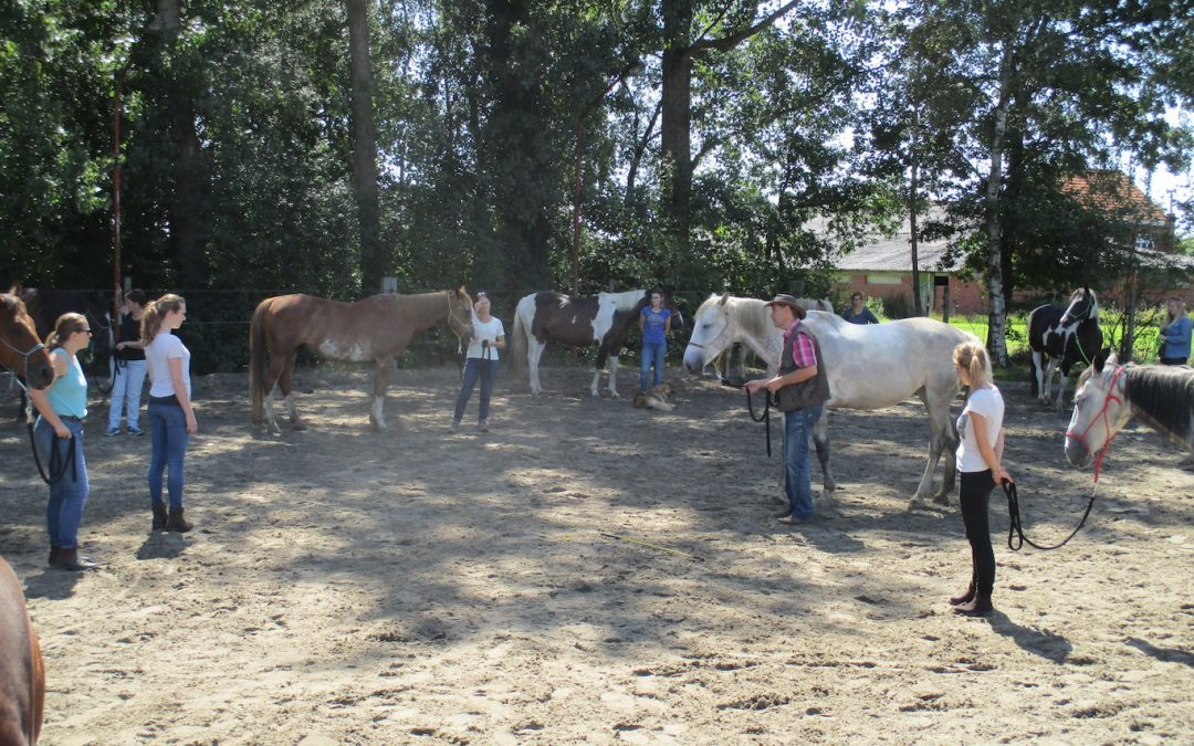 VOLZET – Dagclinic: Grondwerk en bitloos western riding