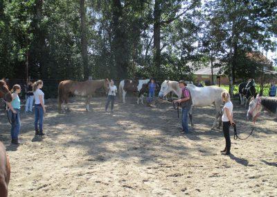 Paardenkamp grondwerk