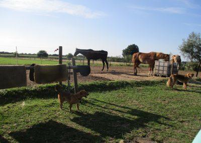 Paardenkamp - paarden eten hooi