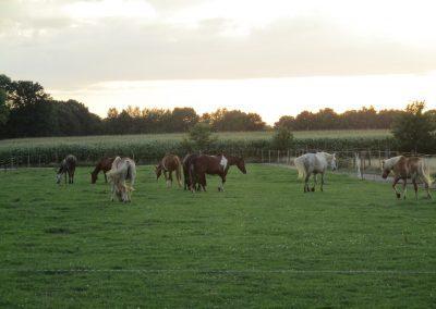 Paarden in paddock paradise
