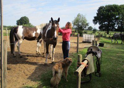 Paardenweekend. Contact met paarden