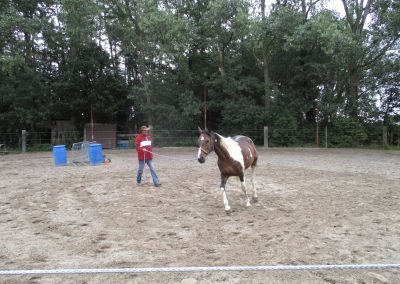 Natuurlijk paardrijden. Grondwerk