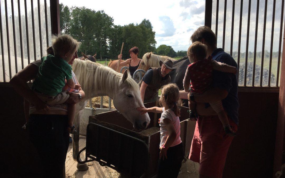Paardenkamp: 2-daagse voor gezinnen (comfort)