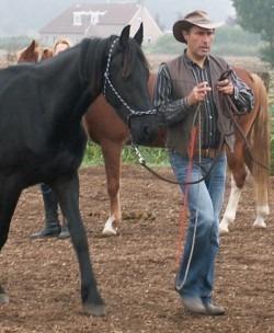 Dagclinic: Grondwerk en bitloos western riding