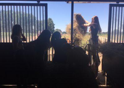 02-Paardenkamp-jongeren-Paarden-hooi-geven