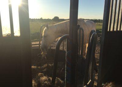03-Paardenkamp-jongeren-Paard-eet-hooi