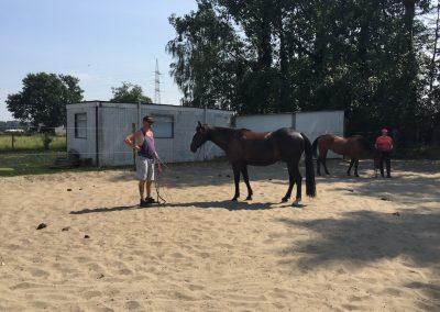 11-Paardenkamp-jongeren-cirkel-mest