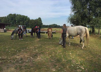 14-Paardenkamp-jongeren-klaar-voor-buitenwandeling