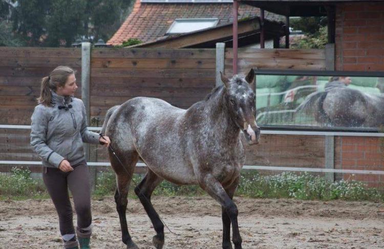 Groeigroep : een paard trainen… voorbij het stappenplan